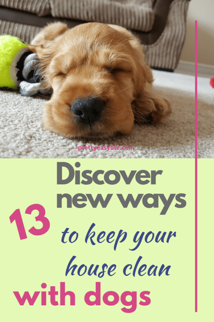 Discover 13 new ways to keep your house clean with dogs