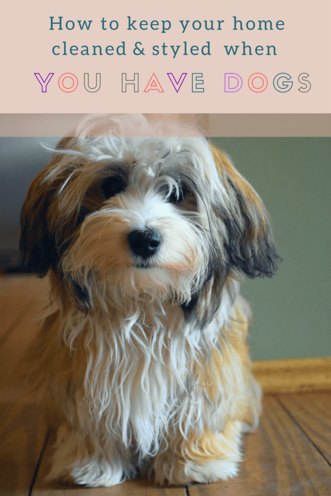 How to keep your home cleaned & styled when you have dogs # clean house with dogs