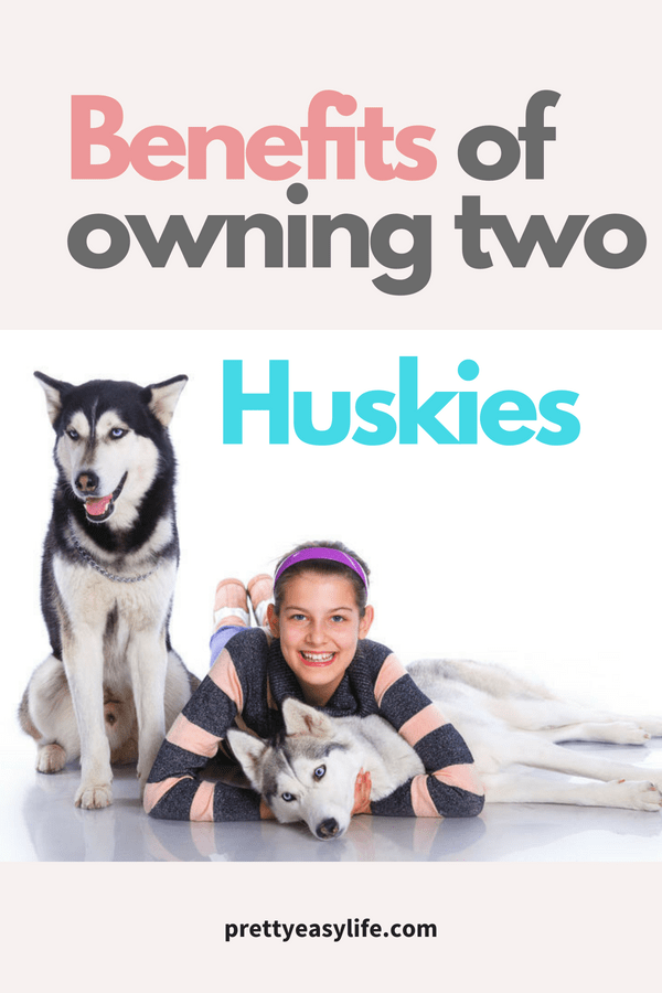 Benefits of owning two Huskies