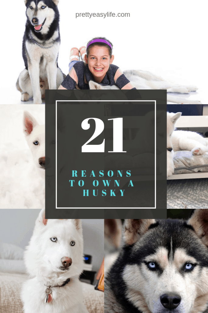 21 reasons why you will love owning a Husky