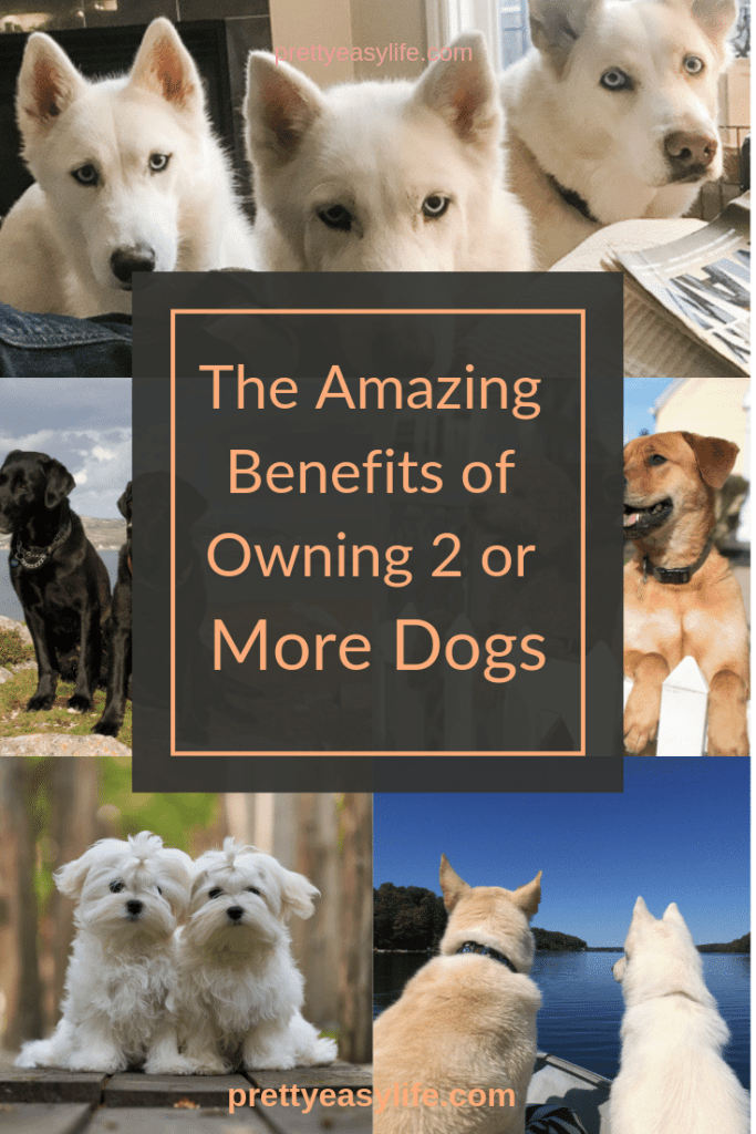 Learn how amazing is to own 2 or more dogs